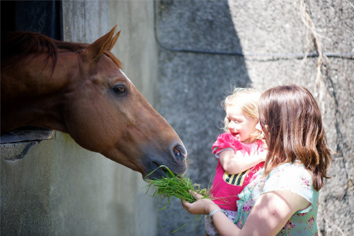 Horses at ballinteggart