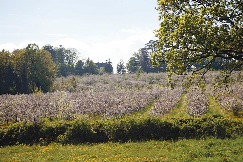 orchard wtith ballinteggart house